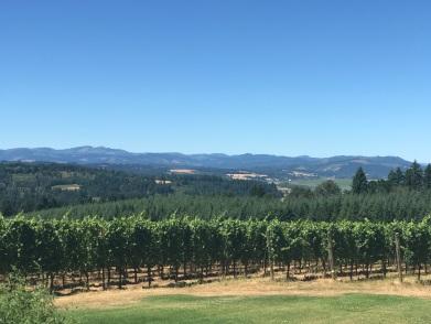 Beautiful scenery on wine tour!